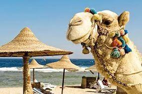 как выбрать тур в египет